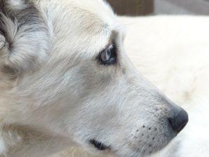 Symbolbild Hunde Bruckberg